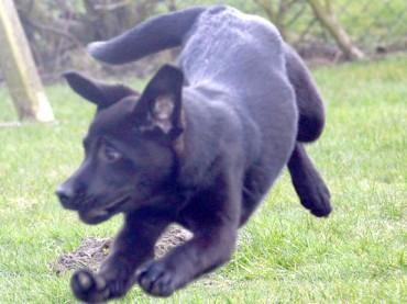 Große Hunde: Herrchen oder Frauchen müssen bei Anmeldung zahlen