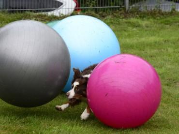 Cross Dogging: Tierisches Sommerfest für Mensch und Hund