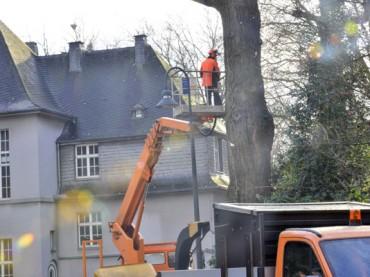 Vier Trauerweiden am Rathaus bleiben als Totholzbäume erhalten