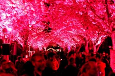Kirschblütenfest: Veränderte Konzeption – Jörg Rost möchte bis 23 Uhr feiern