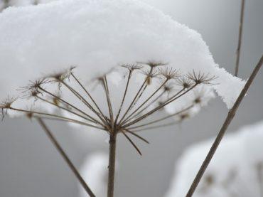 Sturm, Schnee, Dauerfrost und Glatteis: Ohne Versicherung kann's teuer werden