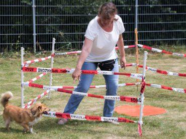 Lose weg, Kuchen weg, Würstchen weg: Sommerfest am Tierheim ein schöner Erfolg