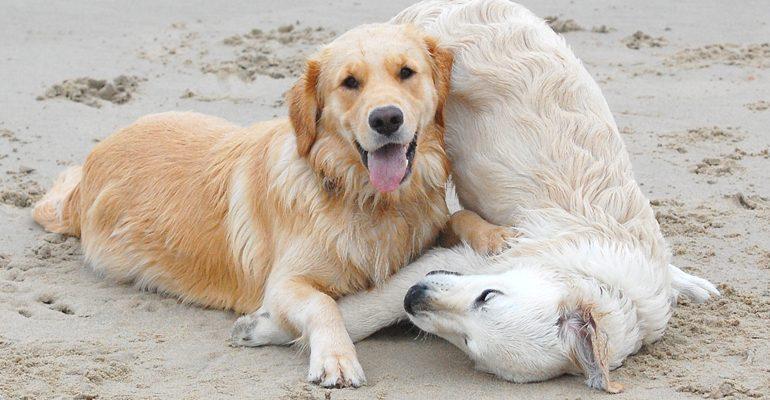Tierisches Strand- und Wandervergnügen: Urlaub mit dem Hund