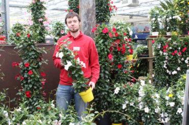 Blumenzauber für Beet, Topf, Kübel und Kasten