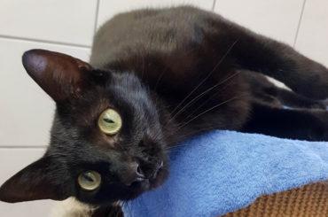 Blacky wartet auf ein neues Zuhause mit Freigang