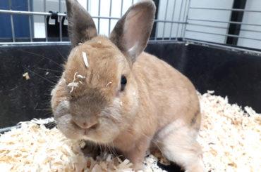 Murphy sucht unterwürfige Kaninchendame