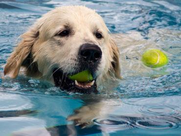 Im Elsebad: Wasserspass für Hunde