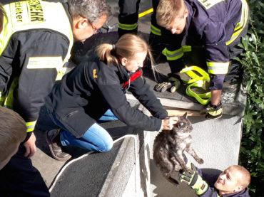 Feuerwehr und Tierärztin retten Katze aus einem Garagenspalt