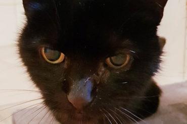 Katzen-Oma möchte Altersruhesitz